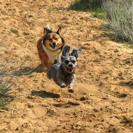 The Race by Gary Winterholler - Animals - Dogs Running