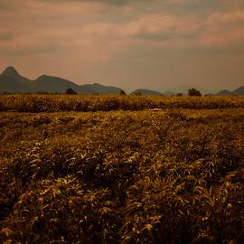 Death Railway, Kantchanaburi - Thailand by Marcelo F. Fernandes - Landscapes Prairies, Meadows & Fields ( field, death railway, railway, thailand, train )