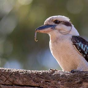 by Bob Stanford - Animals Birds