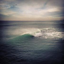 wispy wave & seabird by Bobby Chin - Instagram & Mobile iPhone ( bird, clouds, sky, pacifica, california, wave, sea, wispy, ocean, mist )