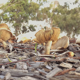 a bunch of fungi  by Sue Anderson - Nature Up Close Mushrooms & Fungi