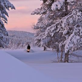 Wild and free by Elisabeth Johansson - Landscapes Travel ( sweden, winter, snowmobile, snow, sunrise )