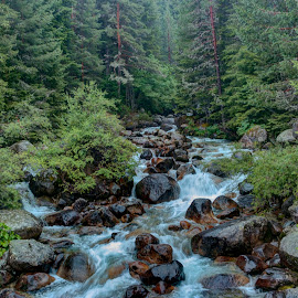 Pirin by Stratos Lales - Landscapes Forests ( water, stream, mountain, forest, rocks )