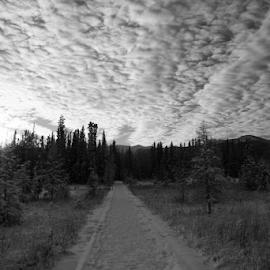 by Darlene Wuenschel - Landscapes Mountains & Hills ( sky, forest )