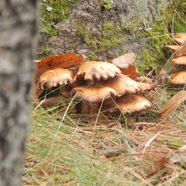 by Catherine Klippenstein - Nature Up Close Mushrooms & Fungi