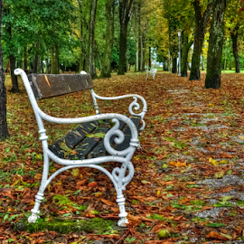 Covered with leaves by Oliver Švob - City,  Street & Park  City Parks ( canon, urban, walking path, karlovac, bench, tree, park, croatia, path, town, leaves, city, public, furniture, object, , fall, color, colorful, nature )