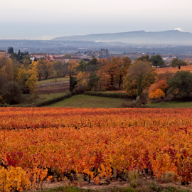 Colors of Fall II by Michel Lorente - Landscapes Prairies, Meadows & Fields ( fall, color, colorful, nature )