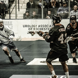 Knighthawks by Enrique Santana Carballo - Sports & Fitness Lacrosse ( sports, game, vancouver, lacrosse, rochester )