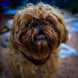 by Kevin Smith - Animals - Dogs Portraits