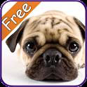 Pug+ Free
