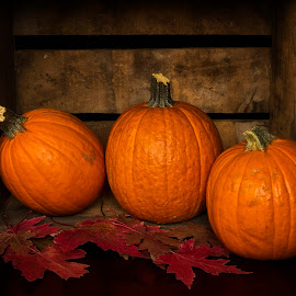 Pumpkins by David Homen - Artistic Objects Still Life ( fall, color, colorful, nature )