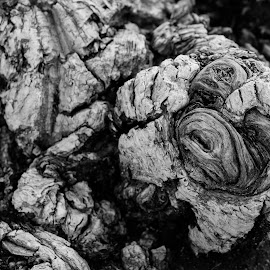 Art in Root by Somabrata Pramanik - Abstract Patterns ( nature art, roots )