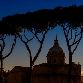 Roman profile by Peter Greenhalgh - Landscapes Travel ( santi luca e martina, roman forum, rome, pine trees, italy, curia )