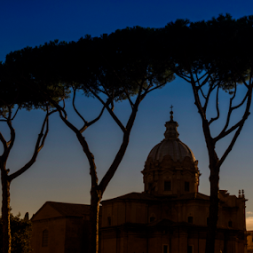 Roman profile by Peter Greenhalgh - Landscapes Travel ( santi luca e martina, roman forum, rome, pine trees, italy, curia )