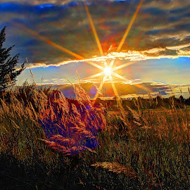 Wild Grasses by Derrill Grabenstein - Landscapes Prairies, Meadows & Fields ( grasses, pasture, sunset, sun, fields )