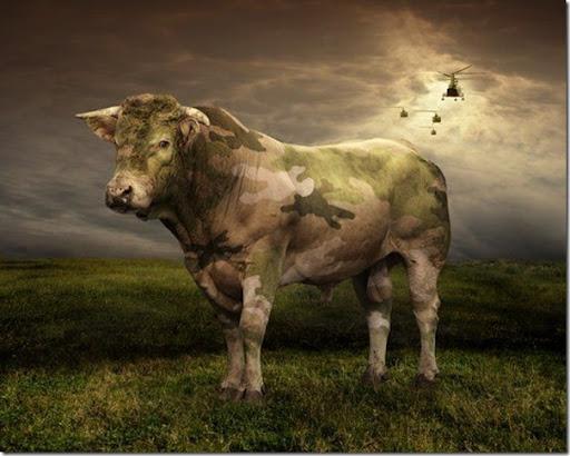 vaca_camuflada