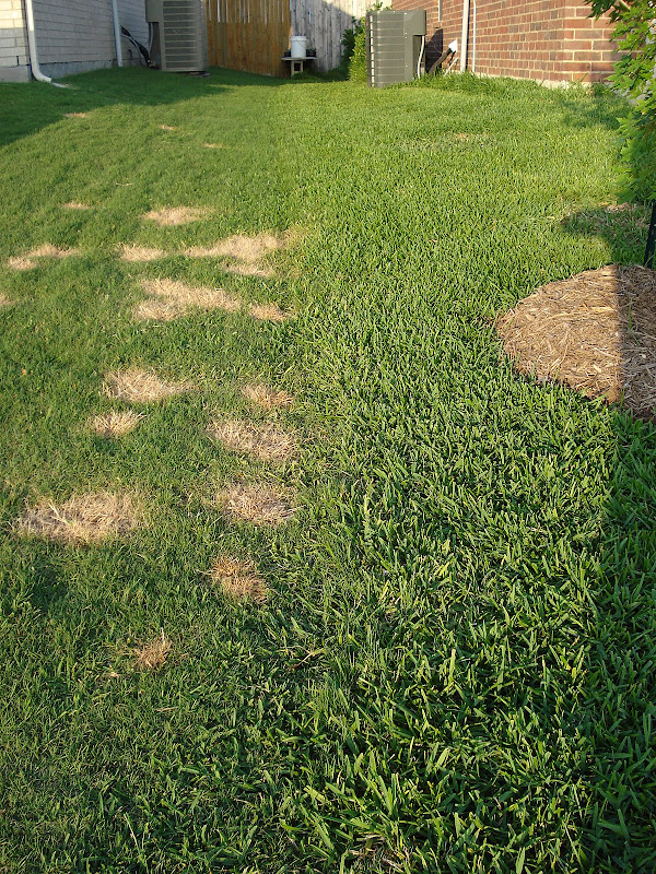 how to kill all grass and weeds