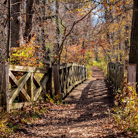 Little Bridge by James Kirk - City,  Street & Park  City Parks ( park, autumn, fall, path, bridge, garden )
