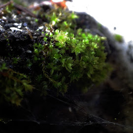 by James Boorn - Nature Up Close Other plants