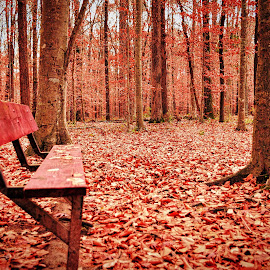 Red Bench Redux by Lou Plummer - City,  Street & Park  City Parks ( park, cumberland county,  )