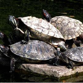 by Tarun Kanti Ghosh - Animals Reptiles