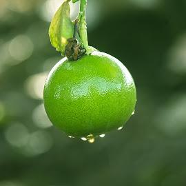 by John Wyne James - Food & Drink Fruits & Vegetables