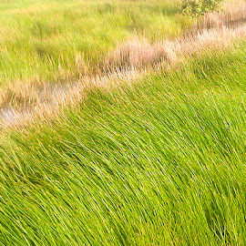 Grass water by Nguyen Trong - Nature Up Close Other plants ( village, dist 2, grass water, morning, rural )