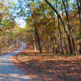 An Autumn Drive by Jackie Stoner - Landscapes Forests ( autumn leaves, autumn, ozarks, leaves, fall folliage,  )