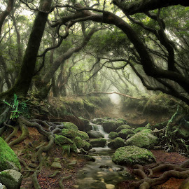 The Hidden Place by Christopher Pearce - Landscapes Forests ( tress, roots, forest, mist, steam )