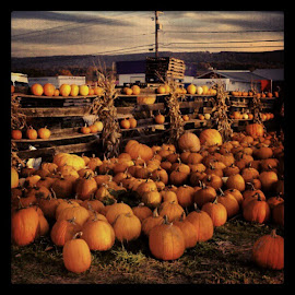 Pumpkins by Jessica Sacavage - Instagram & Mobile iPhone