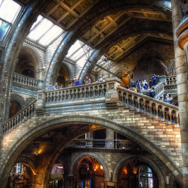 Natural History Museum by Andrea Conti - Buildings & Architecture Other Interior ( londonlondra, history, interior, london, naturale, storia, architecture, museum, public, natural, historic, museo )