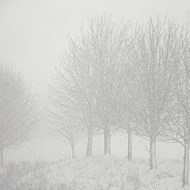 Snowy Couthuin by Monique Greene - Landscapes Weather ( trees, snowy, belgium )