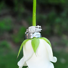 Rings on a White Rose by Julie Josey - Wedding Details ( rose, wedding, diamond, silver, white, rings, engagement,  )