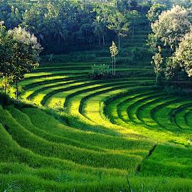 The Beauty of Java by KaryoAdi KaryoAdi - Landscapes Prairies, Meadows & Fields