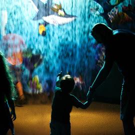 Aquarium Family by Michael Davis - City,  Street & Park  Amusement Parks ( water, animals, vacation, silhouette, florida, family, aquarium, excited, entertainment )