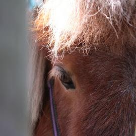 Peek a bo! by Christina Marr - Animals Horses ( abstract, horse, eyes )