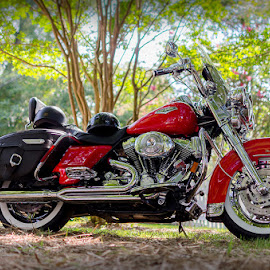 shinny harley by RomanDA Photography - Transportation Motorcycles ( harley davidson, red, bike, hog, saddle, chrome, motorcycle, bags )