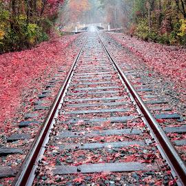 Red Tracks by Lou Plummer - Transportation Railway Tracks ( walking, autumn, color, fog, fall, leaves, rain, hiking,  )