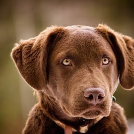 Jack by Jennifer Anderson - Animals - Dogs Portraits