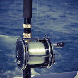 Penn Senator by Ahmed Eldin - Sports & Fitness Watersports ( tackles, rod, reels, sea, fishing, fisherman, boat, rods, fishing boat,  )
