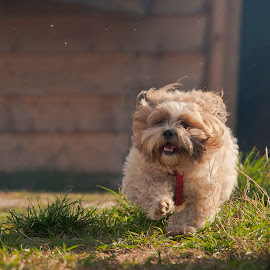 go go go!!! by Constantin Gabriel Bogdan - Animals - Dogs Running (  )
