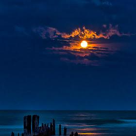 Sue Matsunaga  Moonrise of Gold.jpg
