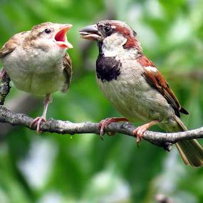 Feeding Time by Patti Hobbs - Animals Birds ( animals birds feeding time baby sparrow )