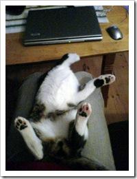 katteprotest