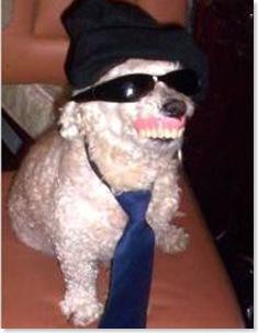 cachorro com dentadura