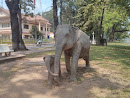 2 Elephants