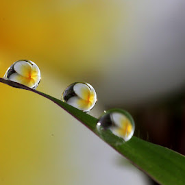 :: Four of One :: by Dedy Haryanto - Nature Up Close Natural Waterdrops