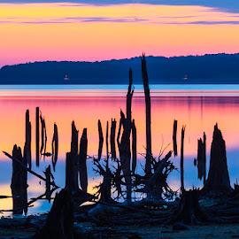 Colors by Joe Ferraro - Landscapes Sunsets & Sunrises ( water, trees, sunrise, stumps, reservior )