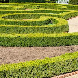 by Matt Meyers - City,  Street & Park  City Parks ( st louis, geometric garden, hedge maze, garden, missouri botanical garden )