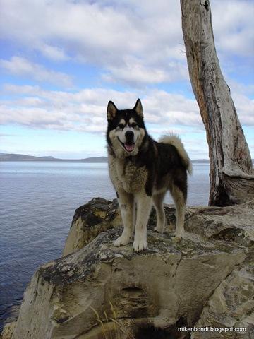 Bondi 2004 - Tasmania